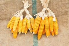 Ears of ripe corn on the gunnysack Stock Photo
