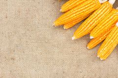 Ears of ripe corn on the gunnysack Royalty Free Stock Photography
