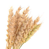 Ears of ripe wheat isolated on a white Stock Photo