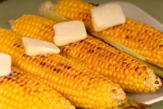 Ears of roasted corn. Four ears of roasted corn with butter Royalty Free Stock Photos