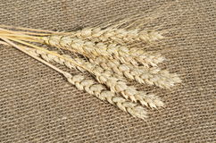 Ears of rye on the burlap. Some spikelets on the background of burlap stock image