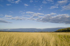 Ears of rye on the field. And storm clouds in the sky, landscape Stock Photo