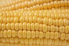 Ears of sweet corn royalty free stock photos