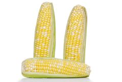 Ears of sweet corn on the cob Stock Images