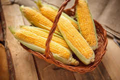 Ears of sweet corn Royalty Free Stock Photo