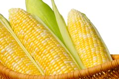 Ears of sweet corn, isolated Royalty Free Stock Photography
