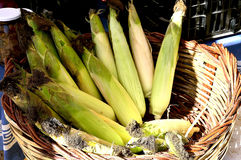 Corncob,biological,vegetables,food,organic,chest. Group of corncob in the chest Stock Photography