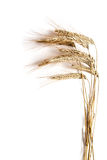 Ears of wheat. On a white background Stock Photo