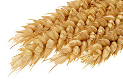 Ears of wheat. Royalty Free Stock Images