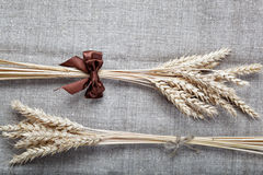Ears of wheat. Ears of wheat on the canvas Stock Photography
