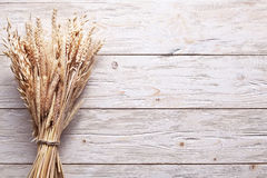 Ears of wheat. Stock Images