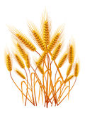Ears of wheat Royalty Free Stock Photography