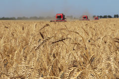 Ears of wheat against the harvesters and field Stock Photo