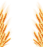 Ears of wheat background. Royalty Free Stock Images