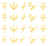 Ears of Wheat, Barley or Rye vector visual graphic icons set. Ideal for bread packaging, beer labels etc. Agricultural decor Royalty Free Stock Photos