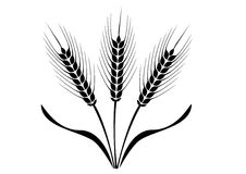 Ears of Wheat, Barley or Rye  visual graphic icons.  Royalty Free Stock Photos