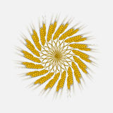 Ears of wheat, barley or rye are woven into one bundle. Vector Illustration, icon, symbol Compact, cereals harvested a new crop of. Illustration for your Stock Photo