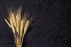 Ears of wheat on black. Cloth background Stock Image