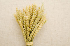 Ears of wheat is in the bouquet. Royalty Free Stock Photography