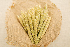 Ears of wheat is in the bouquet. Royalty Free Stock Images