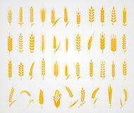 Ears of wheat bread symbols. Cereals icon set with rice, wheat, corn, oats, rye, barley. Concept for organic products label, harvest and farming, grain bakery Stock Image