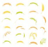 Ears of wheat bread symbols. Stock Photography