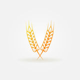 Ears of wheat bright logo or icon Royalty Free Stock Images