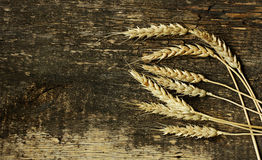 The ears of wheat. Stock Image