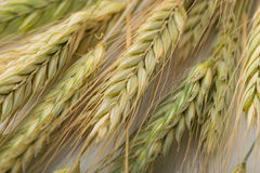 Ears of wheat, a bundle of wheat ears, background Stock Photography