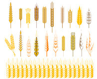 Ears of wheat and cereals symbols Stock Images