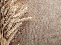 Ears of wheat and corn border burlap background Stock Images