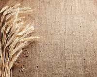 Ears of wheat and corn border burlap background Royalty Free Stock Photo