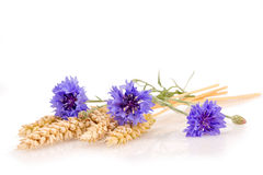 Ears of wheat with cornflowers. On white background stock images