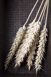 Ears of Wheat country rustic still life. Stock Image