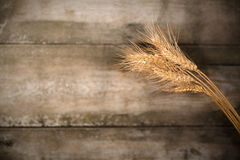 Ears of wheat  on dark wood background Stock Photography