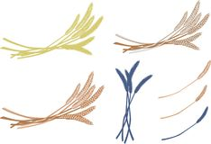 Ears of wheat. Of different colors, vector illustration, details of wheat ears, oats, spikelets of different colors Stock Photos