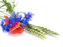 Ears of wheat with fields flowers Stock Photography