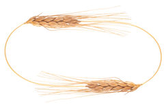 Ears of wheat. Frame Royalty Free Stock Photography