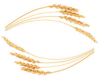 Ears of wheat. Frame. On white background Royalty Free Stock Image