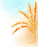 Ears of wheat in front of blue sky Stock Photography