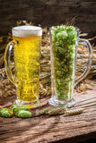 Ears of wheat in gold surrounded by fresh beer hops Royalty Free Stock Photos