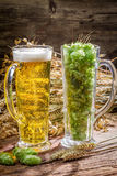 Ears of wheat in gold surrounded by fresh beer hops Stock Photos