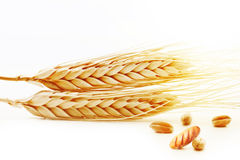 Ears of wheat with grain and fresh bread Stock Images