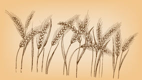 Ears of wheat. In graphic style stock illustration