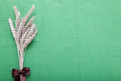Ears of wheat on the green. Ears of wheat on the green canvas Royalty Free Stock Image