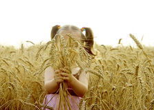 Ears of wheat in the hands of a child Royalty Free Stock Image