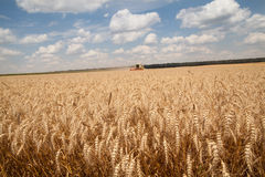 Ears of wheat. Harvesting machine on background Royalty Free Stock Photos