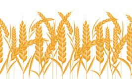 Ears of wheat horizontal border seamless. Gold color grain with cartoon style. Vector illustration. Ears of wheat horizontal border seamless. Gold color grain royalty free illustration