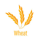 Ears of Wheat icon. Royalty Free Stock Image