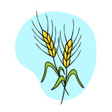 Ears of wheat illustration Royalty Free Stock Image